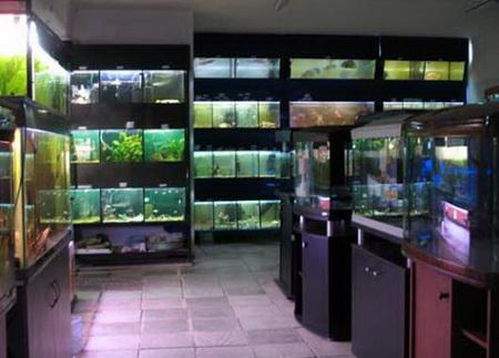 Магазин аквариумов